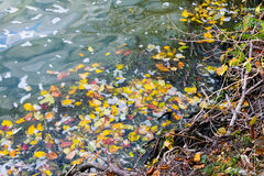 Beautiful river in autumn Stock Photography