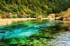 Beautiful river with azure crystal water among evergreen woods Royalty Free Stock Images