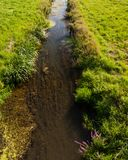 Summer on the lowland river bed landscape Royalty Free Stock Images