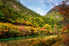 Beautiful river with crystal clear water among fall woods Royalty Free Stock Photography