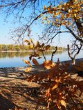 Beautiful River Danube. With autumn trees stock photos