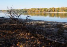 Beautiful River Danube. With autumn trees stock image