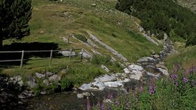 Beautiful river detail on the Pyrenees (Spain) Vall de Nuria stock video
