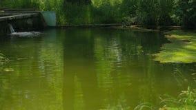 Beautiful River Flowing In Greenery stock video