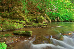 Beautiful river in the forest Stock Images