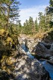 Beautiful river in forest nature Peaceful canadian background.  royalty free stock photos
