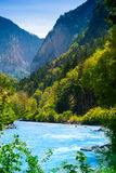 Beautiful river in the forest near Alps Royalty Free Stock Photos