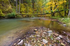 Beautiful river in forest Royalty Free Stock Photos