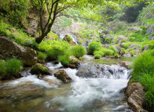 Beautiful river in Galicia Royalty Free Stock Images