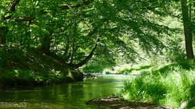 Beautiful river in green sunny forest. Europe, Germany. Clip contains brook, creek, stream, water, nature stock video footage