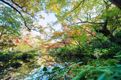 Beautiful river in japanese garden Stock Photo