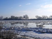River Nemunas and snowy trees in winter, Lithuania Stock Image