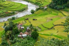 Beautiful river and rice field in Banaue. Philippines Stock Photography