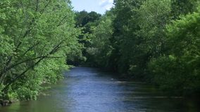 Beautiful river running through the greenery (3 of 7) stock video footage