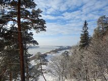 River Nemunas and plants in winter , Lithuania Royalty Free Stock Image