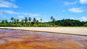 Beautiful river at Trancoso beach with palm trees, near Porto Seguro, Bahia, Brazil royalty free stock photos