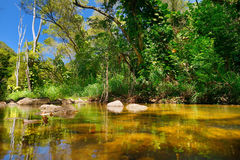 Beautiful river in Waimea Valley on Oahu island. Beautiful tropical river in Waimea Valley park on Oahu island Stock Photo