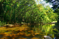 Beautiful river in Waimea Valley on Oahu island Royalty Free Stock Photo