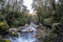This is a beautiful river walk in New Zealand royalty free stock photography