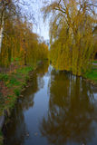 Beautiful river and weaping willows Royalty Free Stock Photo