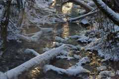 Beautiful river in winter forest with fairy trees Royalty Free Stock Image