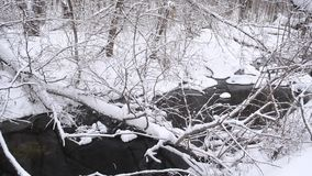 Beautiful river in the winter forest, spring flow from the melting snow, trees covered with snow, beautiful winter park. stock video footage