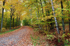 A beautiful road in autumn Stock Photos