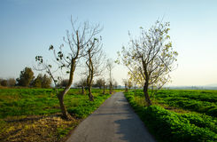 Beautiful road on a beautiful day. Beautiful road on a beautiful spring day in Israel Royalty Free Stock Photos