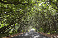 Beautiful road and bikers Royalty Free Stock Photos