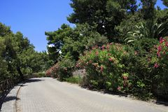 Beautiful road and blooming vegetation. Royalty Free Stock Photography