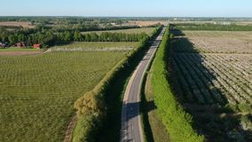 Beautiful road and blossoming apple tree orchard, aerial stock video footage