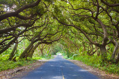 Beautiful road Royalty Free Stock Photography