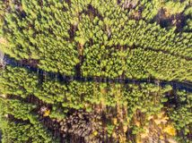 Beautiful road through evergreen pine forest on bright sunny day. Eco tourism and travel concept. Aerial drone virew. Tree view landscape nature background royalty free stock photography