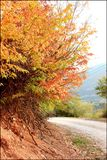 Beautiful road in fall Royalty Free Stock Photo
