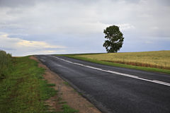 Beautiful road among farm fields Royalty Free Stock Images