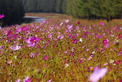 A beautiful road with flowers Stock Photography