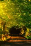 Beautiful road the forest. Beautiful road in the forest royalty free stock image