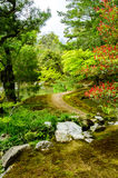 Beautiful road in the forest Royalty Free Stock Photos