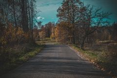 Beautiful road in the forest royalty free stock images