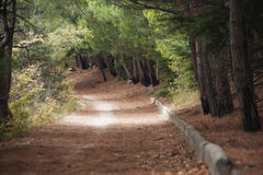 Beautiful road goiing through nice forest. Morning light falls on a forest road stock photography