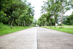 Beautiful road in the middle of beautiful trees. Green road for protected environment and natural Royalty Free Stock Image