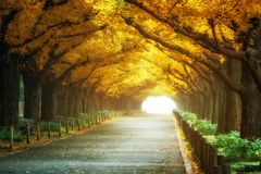 Beautiful Road Path Under Trees Arch In Autumn Royalty Free Stock Images