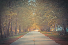 Beautiful road between Pine trees in sunny day. Stock Image