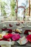 Beautiful road with rose petal for a wedding. Ceremony Royalty Free Stock Images