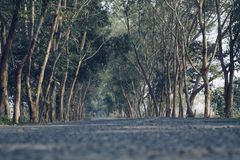 Beautiful road between trees stock photography