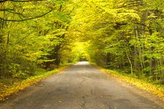 Beautiful road through the trees Royalty Free Stock Image