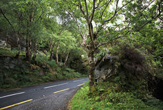 Beautiful road in the woods. Royalty Free Stock Photos