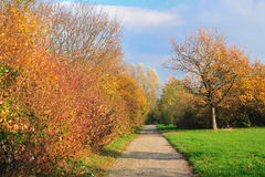 A beautiful road. With yellow trees and green grass surrounded,a nice walk place Royalty Free Stock Photo