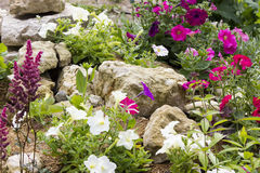 Beautiful rock garden. With many different plants Royalty Free Stock Photography