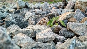 Image of beautiful stone, stone and plant Royalty Free Stock Images